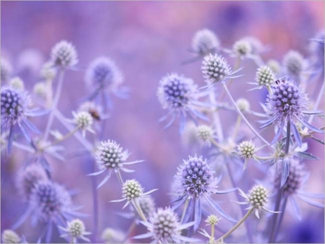 Flowers Plants Best Desktop Backgrounds Designs