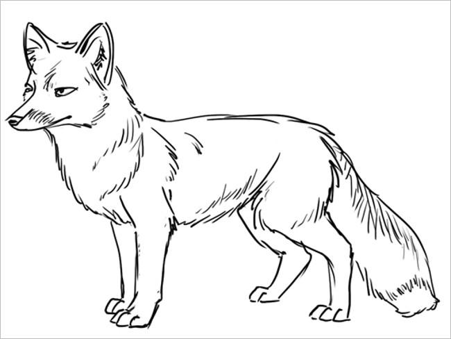 Main Fox Template Design