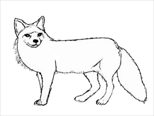 Simple & Natural Image Fox Template