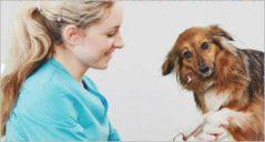 12+ Pet Animal Magento Templates