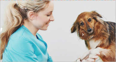 Pet Animal Magento Templates