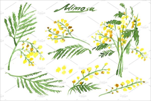 Hand-Drawn Mimosa Pattern