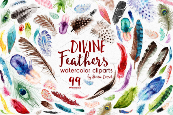 Peacock Divine Feathers