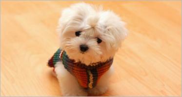 Pet Shop ZenCart Templates