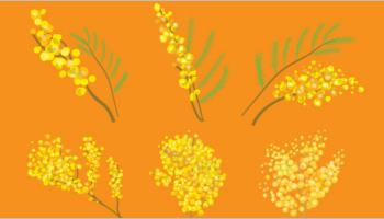 mimosa patterns