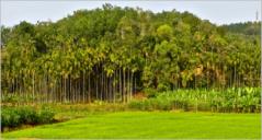 8+ Agriculture PrestaShop Themes