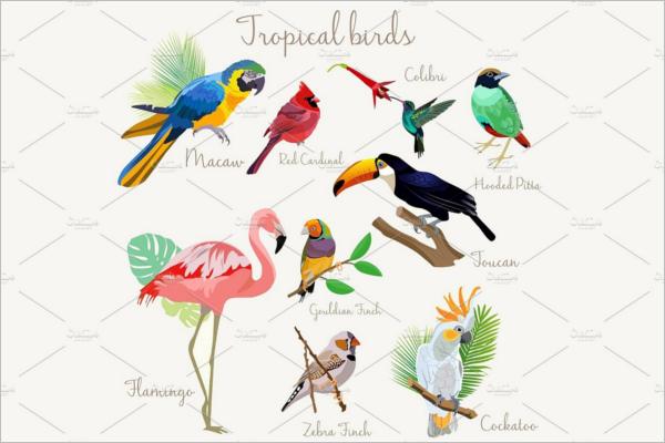 Bright color Exotic tropical birds.