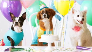 Pets Birthday Party