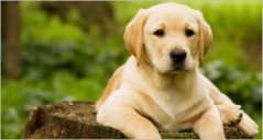 21+ Best Pets Prestashop Templates