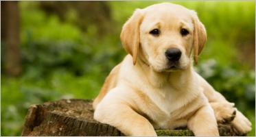 Pets Prestashop Templates