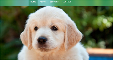 Pets OsCommerce Templates