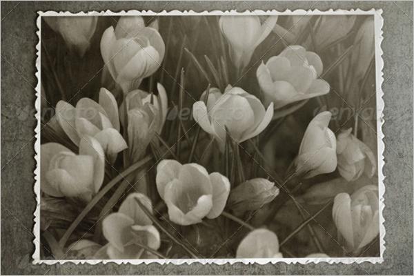 Retro Photo Frame Design