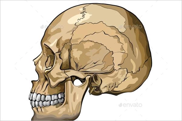 Human Brain Vector Design