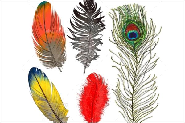 Bird Feather Vector Design