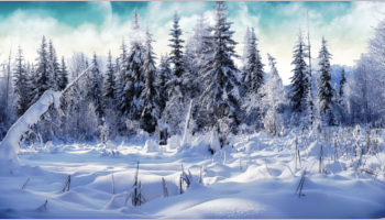 Winter Background Templates