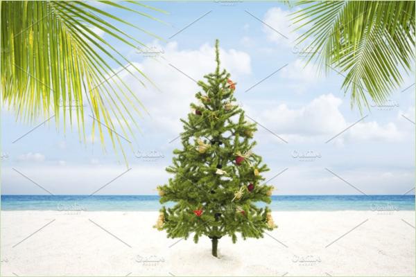 Christmas Tree Plant Idea