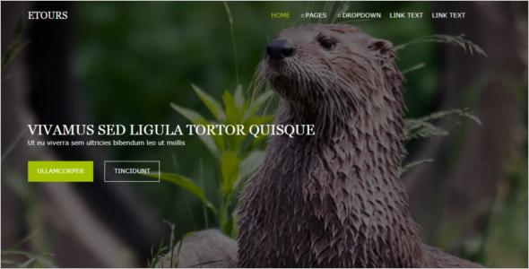 Free CSS & Website Template