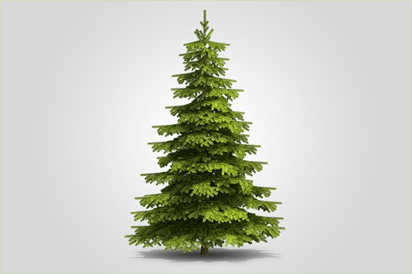 Outdoor Christmas Tree Design
