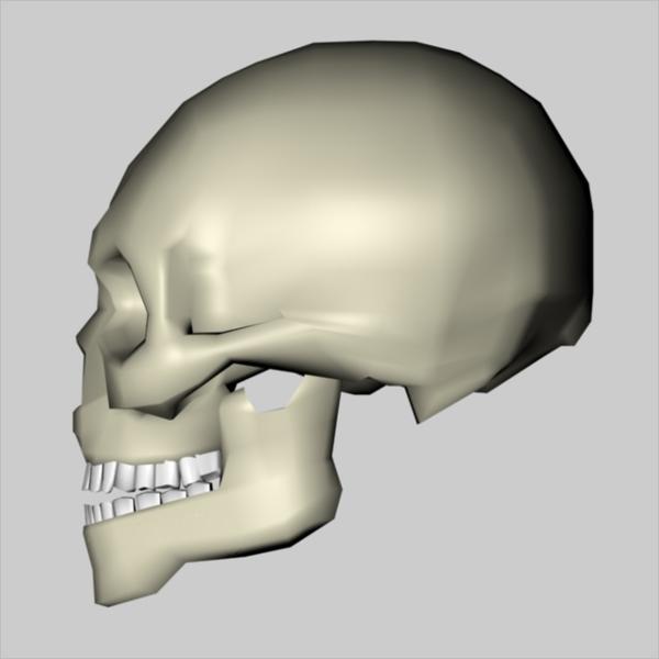 3D Low Poly Skull Design
