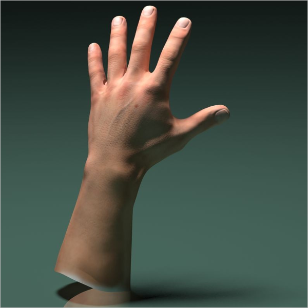 3D Model Of Human Male Hand