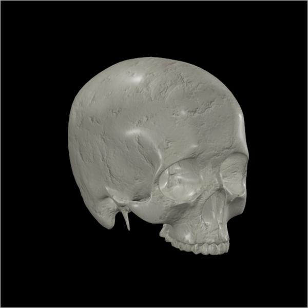 Anatomy Skull 3D Design
