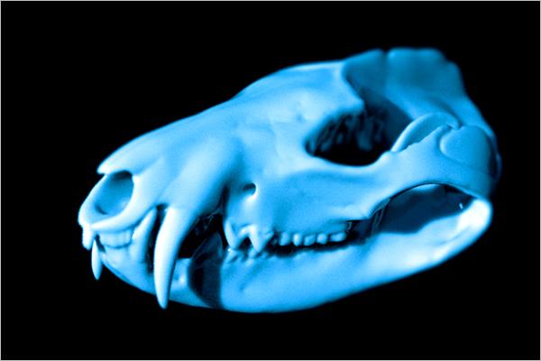 Animal Skull 3D Design