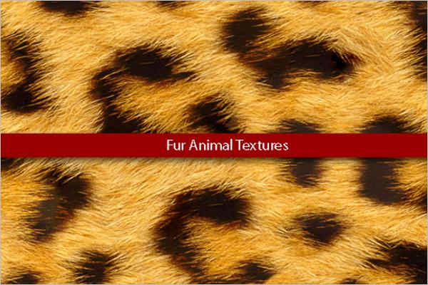 Animal Texture Design