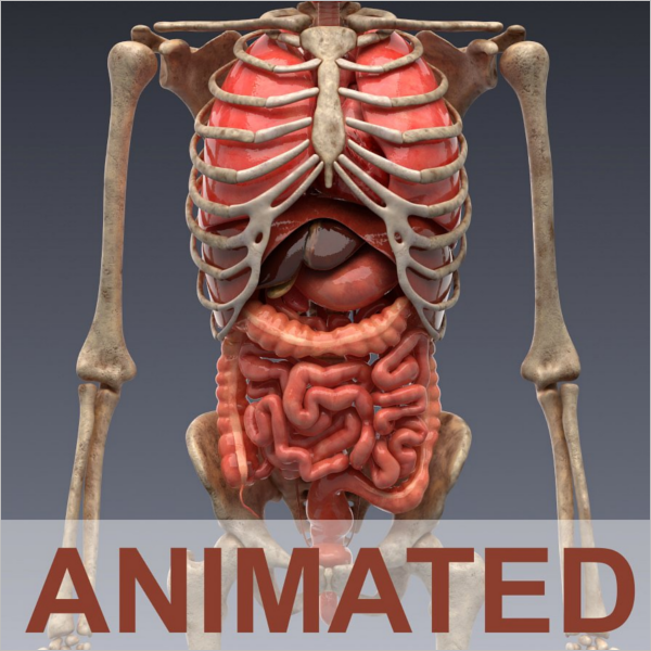 Animated Internal Organs Design