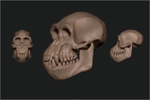 Chimpanzee Skull 3D Design