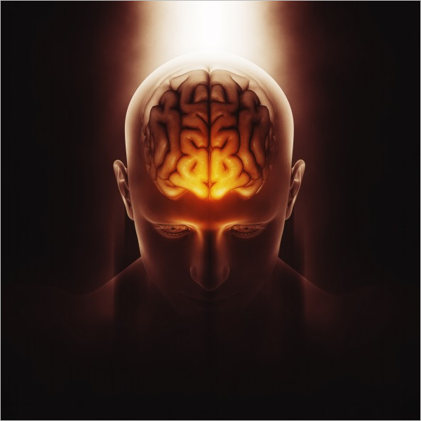 Free 3D Render Of Human Brain