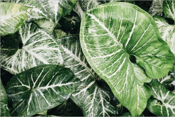 Greenery Nature Texture Design