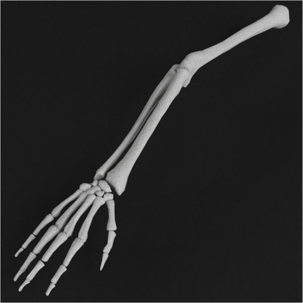 Hand & Arm Bone Model Design
