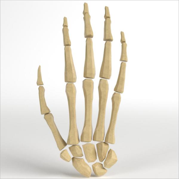 Hand Bones Model Design