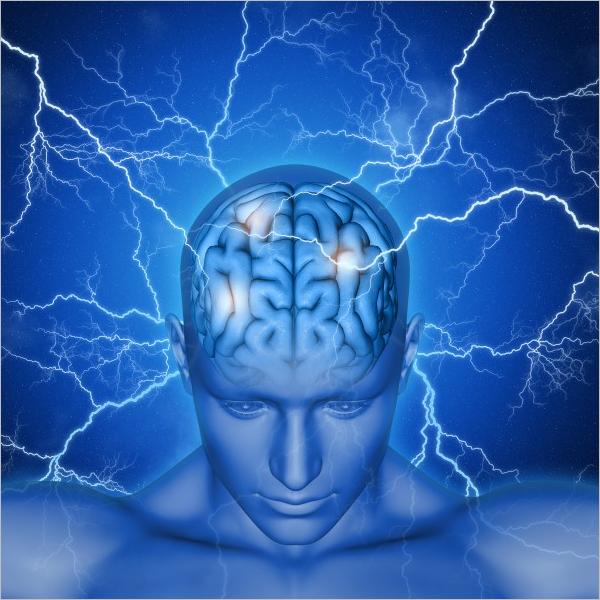 Human Brain Sample Model