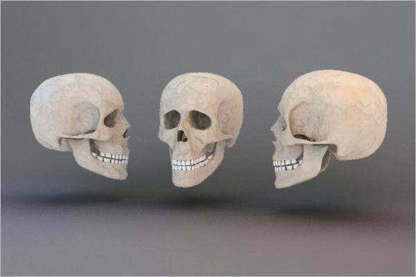 Human Skull 3D Design