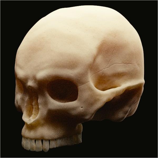Human Skull 3D Print Model
