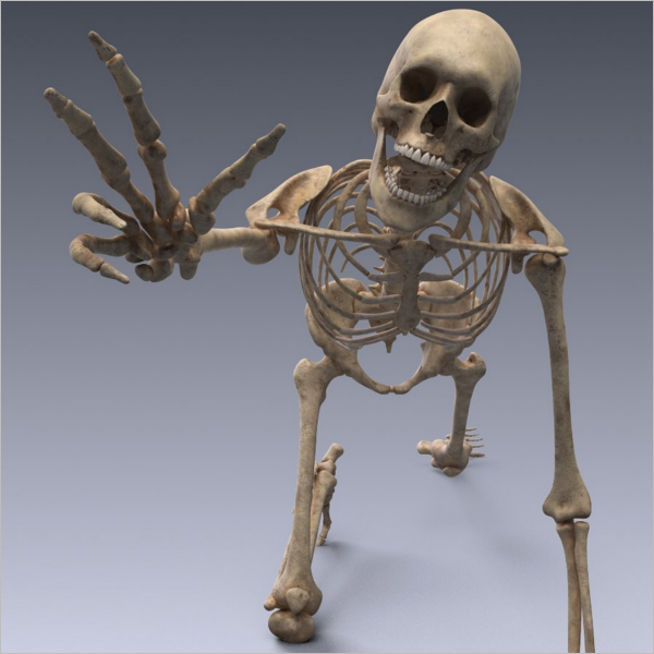 Human skeleton 3D Design