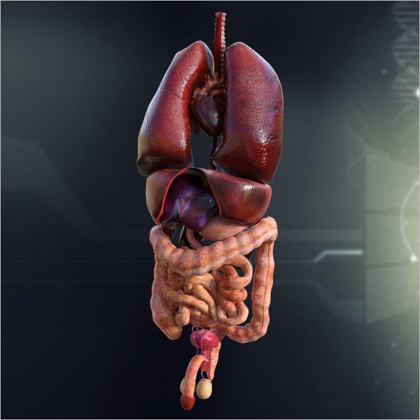 Internal Organs Anatomy Design