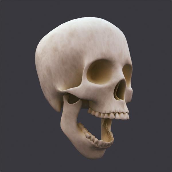 Minimal Skull 3D Design