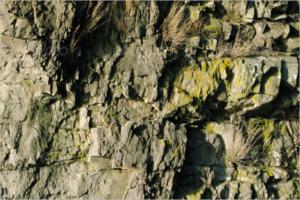 Natural Rock Texture Design