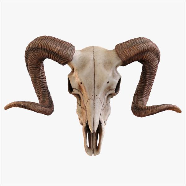 PhotoRealistic Skull 3D Model