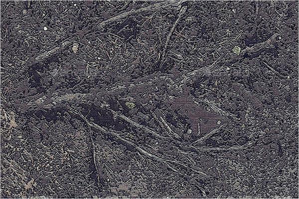 Roots Texture Design