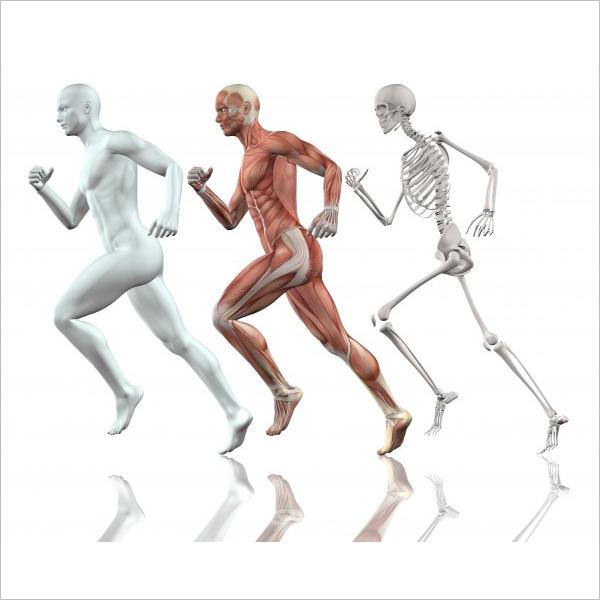 Sample Human Body 3D Design