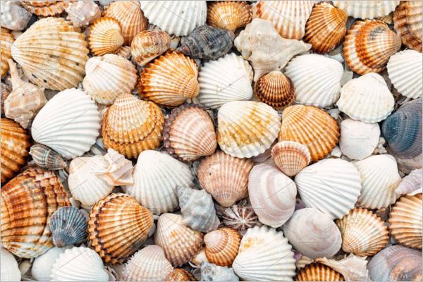 Shells Texture Design