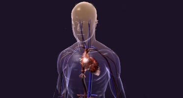 3D Human Models
