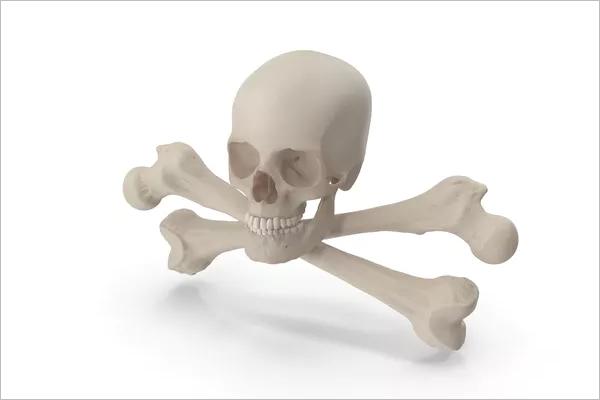 3DSkull Design Model