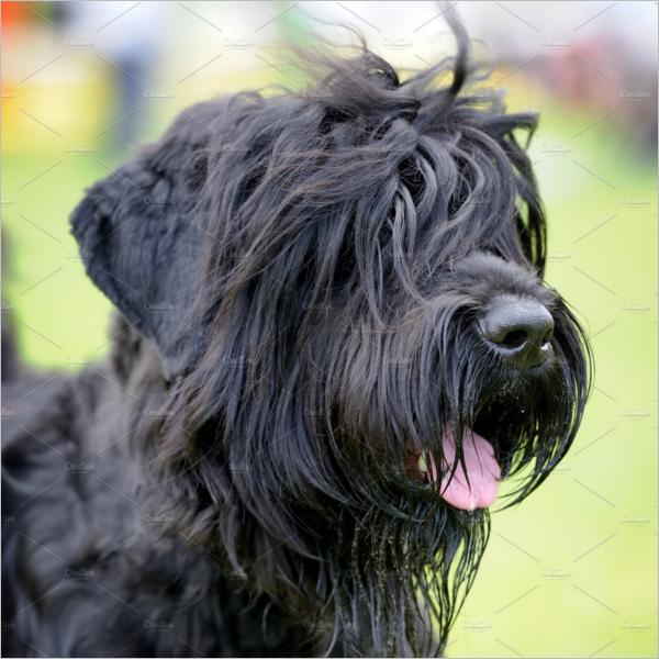 Adorable Dog 3D Design