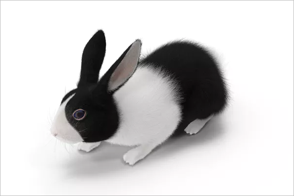 Black Rabbit 3D Image