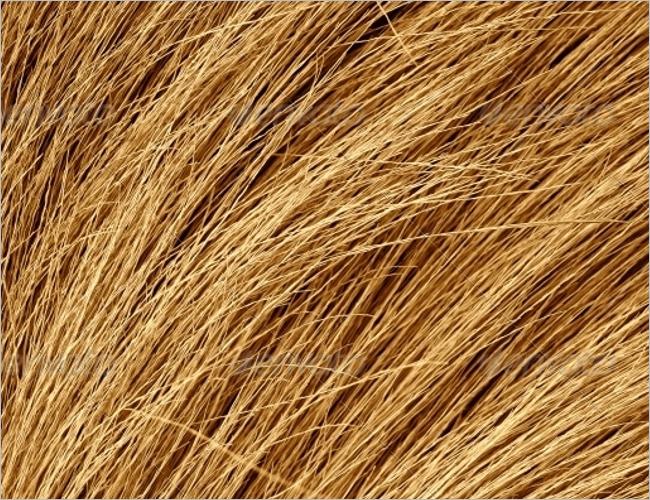 Dry Grass Texture Design