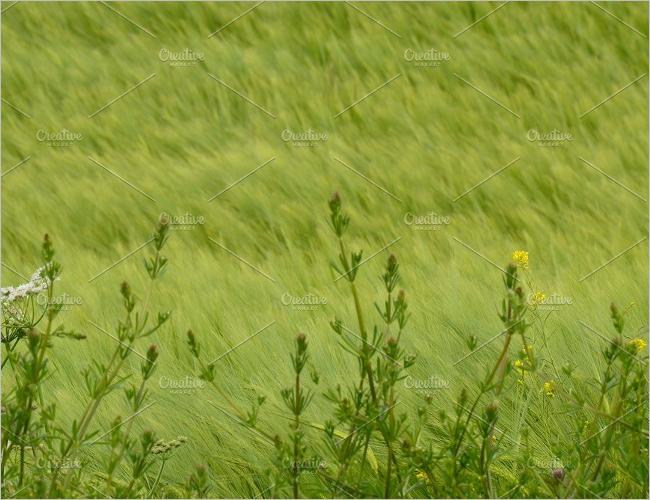 Grass & Flower Texture Design